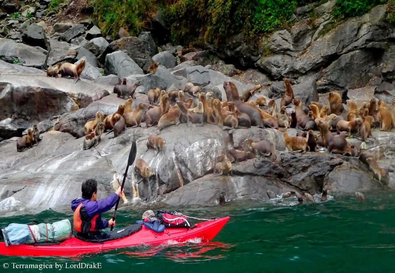 Expedicion en Kayak a los Fiordos loberia Cahuelmo
