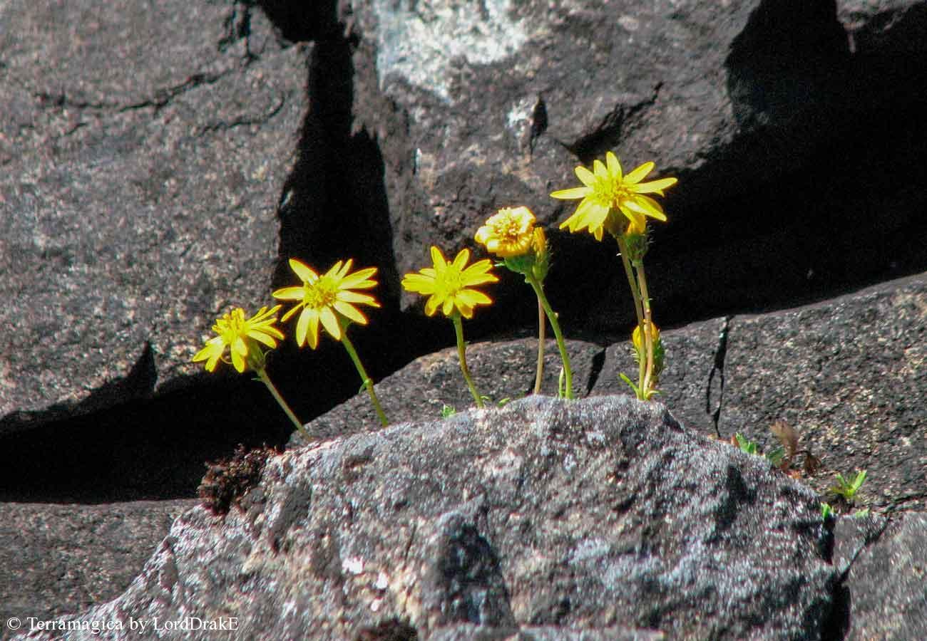 Travesia en Kayak al Lago Espolon flores sobre las rocas